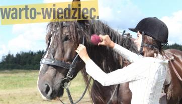 Porada - Kupno konia do jazdy rekreacyjnej