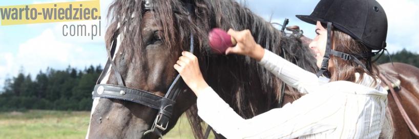 Kupno konia do jazdy rekreacyjnej
