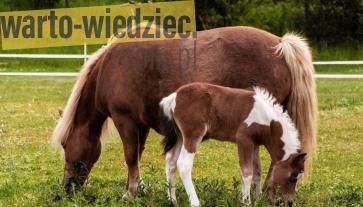 Porada - Szkolenie konia
