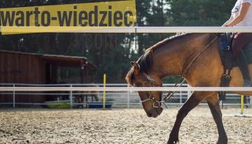 Porada - Letnia szkółka jeździecka